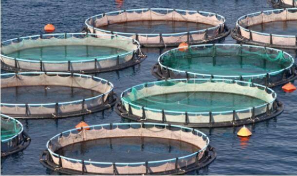 aquaculture of fish, shrimp farm