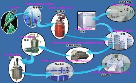 Process flow chart of penicillin production